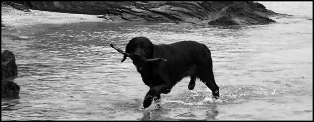 Tess S Dog Training Winnipeg Mb