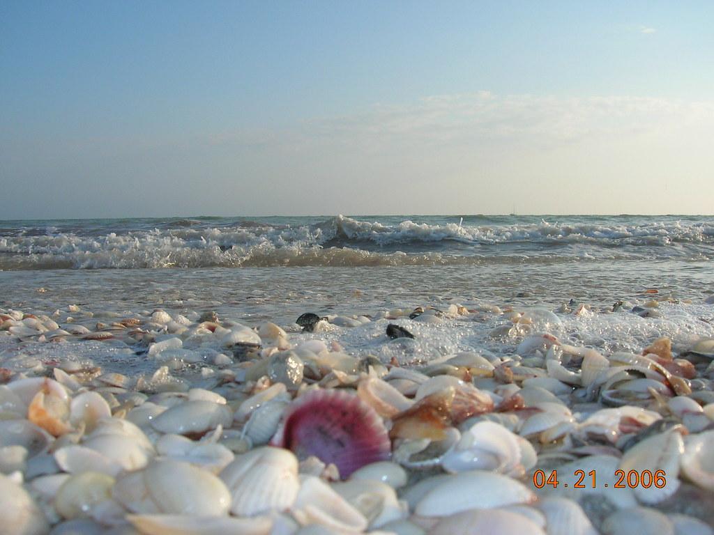 Best Fl Beach For Shells