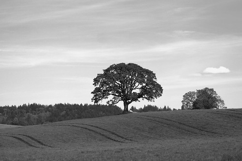 Tree in a field | by Jonathan Assink