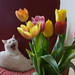 Cat and Flowers...