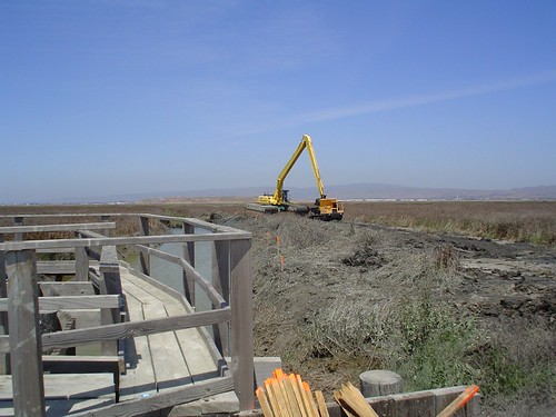 The Long Process of Wetlands Restoration | by kqedquest