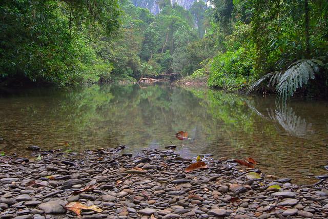 ... paku, mulu summit trail, gunung mulu national park, sarawak, malaysia