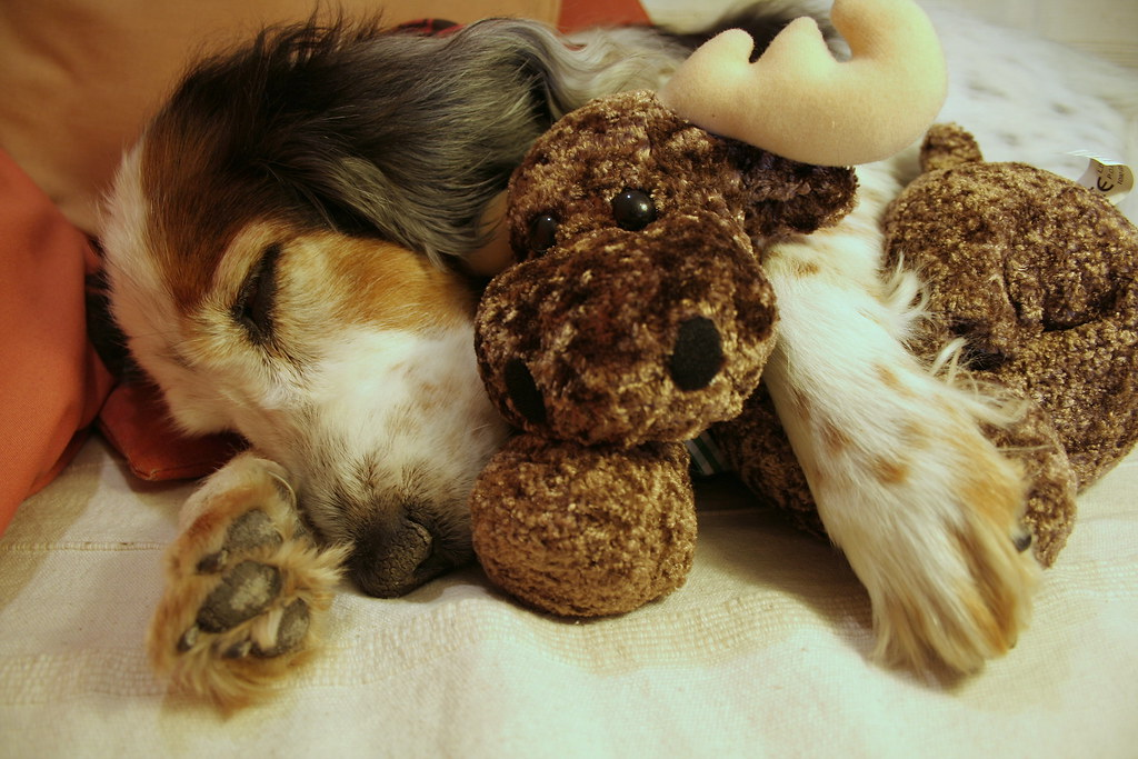 Image Result For Can Dogs Dream