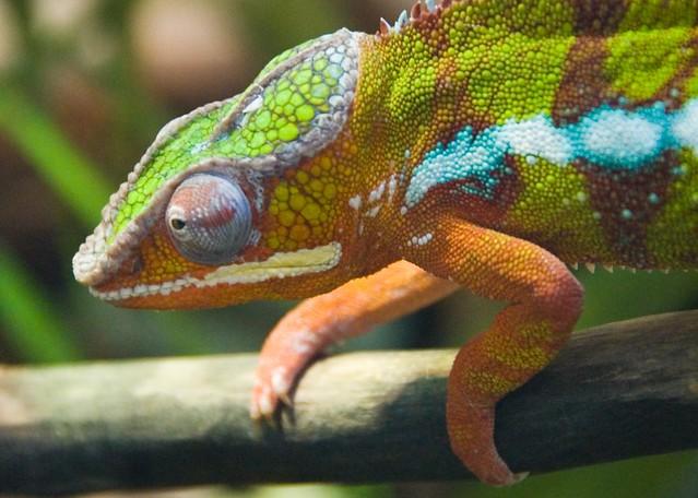 Shedd Aquarium Shedd Aquarium By Abmiller99 Flickr