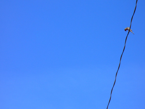 Bird On A Wire | by Icky Pic