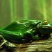 Faux Fake Frog