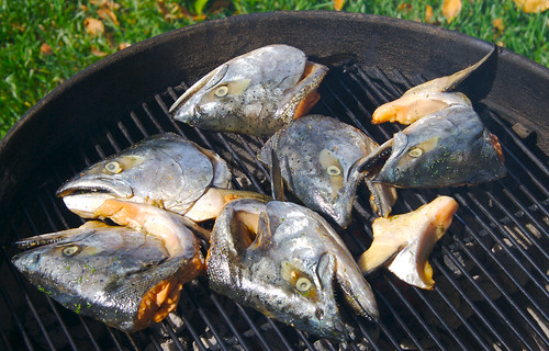 Grilling Salmon heads | by bbum