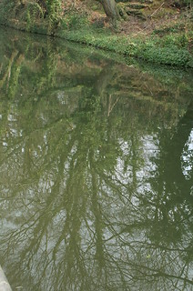Trees Reflected in the Canal | by tim ellis