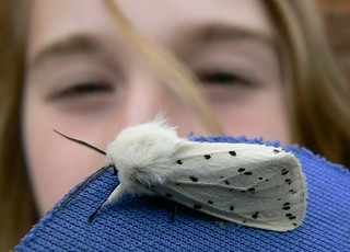 Sarah Lovaniensis with Spilosoma lubricipeda | by e³°°°
