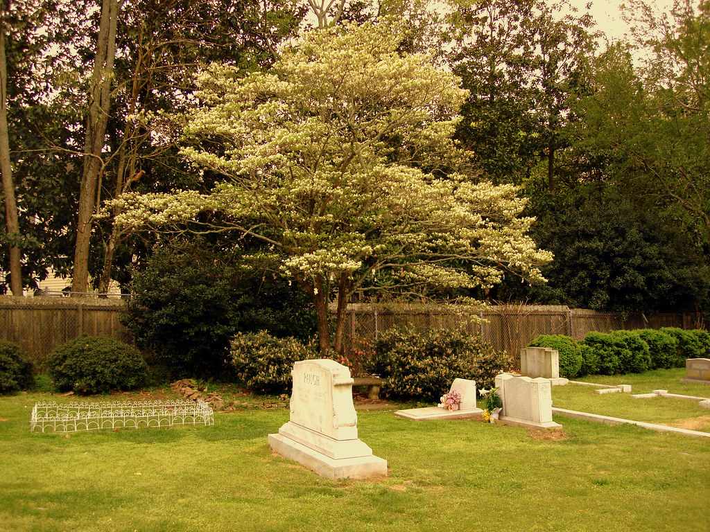 The tree next to JonBenet Ramsey\'s grave that holds all of… | Flickr