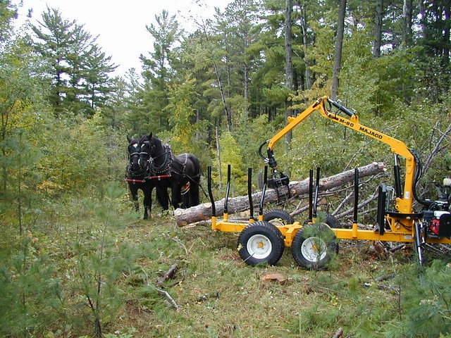 Cat Forestry Equipment For Sale