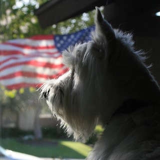 Wee Westie - A Marine Recruit's Dog | by Randy Son Of Robert