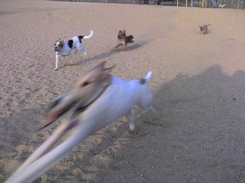 Some Fast Moving Dogs | by justin