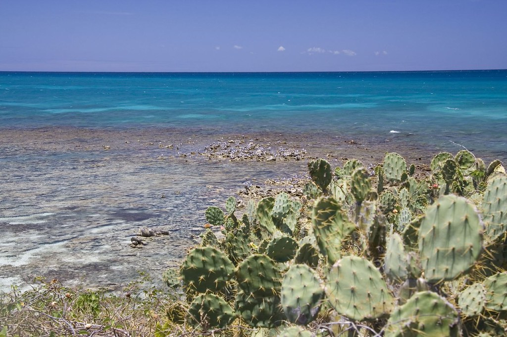 Prickly Pear Island Map