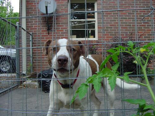 Stop Barking Dog Gadgets On Ebay