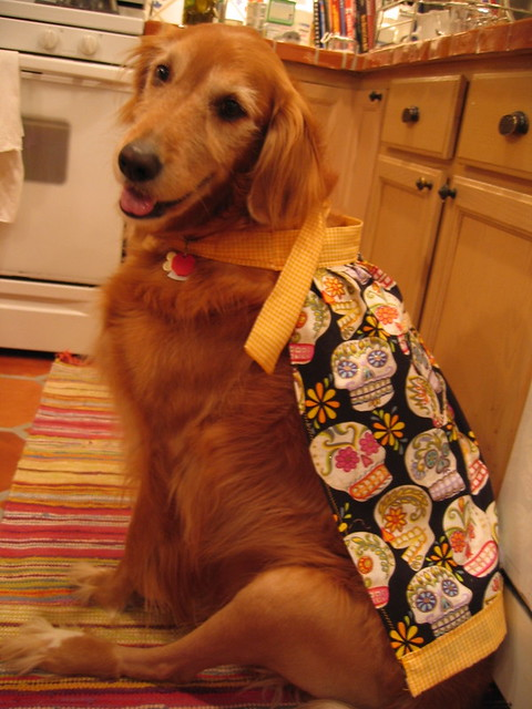 Image Result For Can Dogs Wear
