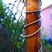 wirepole