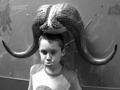 my kid is unique, he wants to be a musk ox when he grows up... | by Cameradawktor