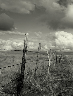Sandhills Fence | by Green Panda