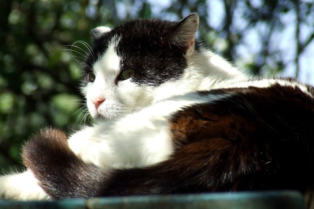Adopted Stray Cat Ran Away