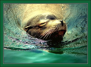 Seal 2 | by nature1955
