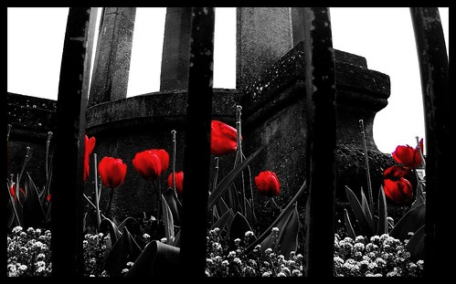 Flowers Black And White And Red