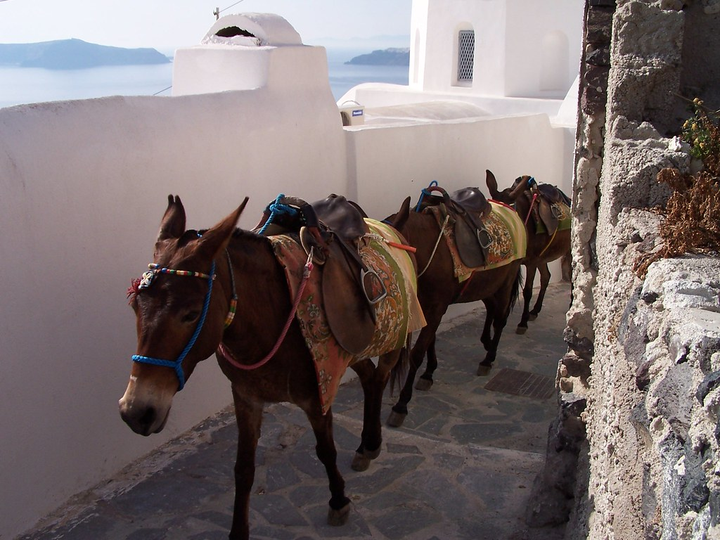 donkeys walking through Santorini