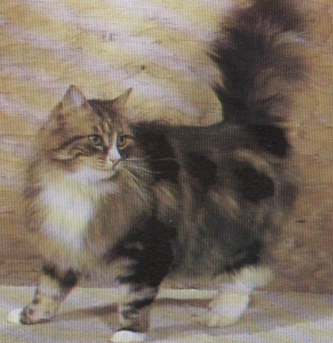 Brown and White Tabby Maine Coon Cat | The Main Coon was ...