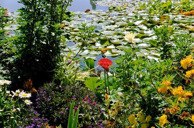 Park Als Tuin : 1990 03 san diego botanische tuin balboa park usa flickr