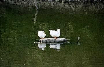 【兵庫】明石で行っておきたいおすすめの観光地33 …