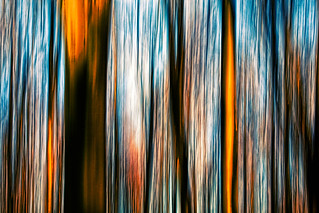 Forest Motion I | by deceptive