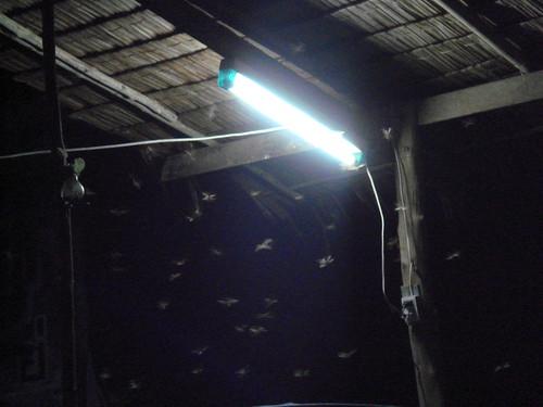 Invasion de mouches volantes 2 leschateaucollet flickr - Invasion de mouches pourquoi ...