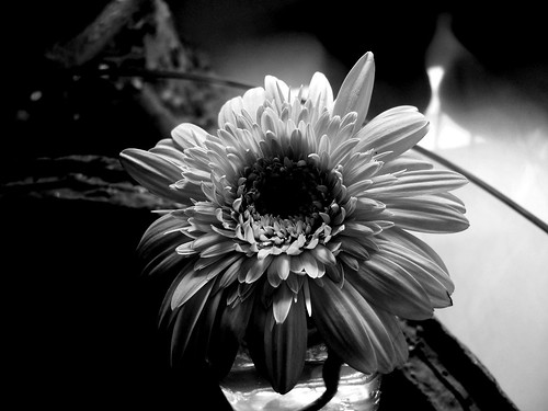 BW shot of the flower | by Swami Stream