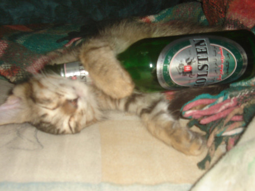 my drunk cat | by Ibrahim Owais