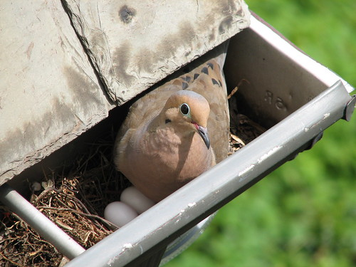 Bad nest placement | by timwindsor