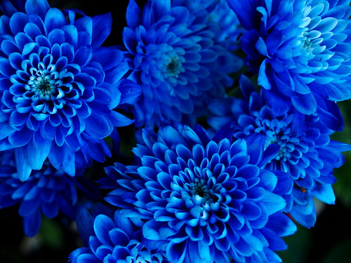 blue flowers | by Hantta