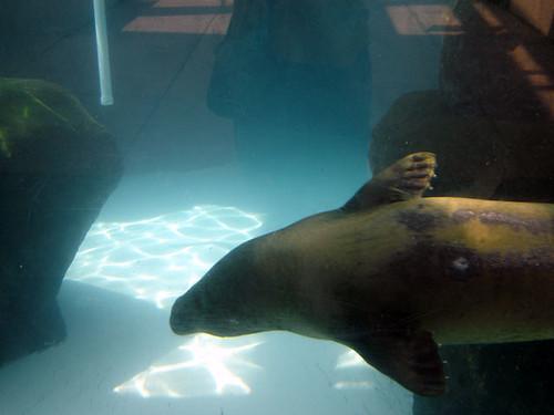Virginia Aquarium Jobs