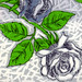 Sketchy Rose