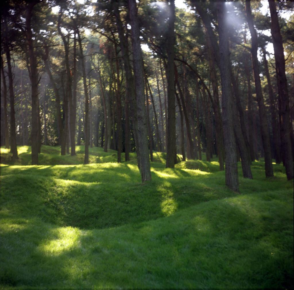 Vimy Ridge Memorial Park: Trenches, Newfoundland Park, Vimy Ridge