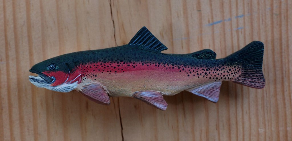 Image Result For Rainbow Trout