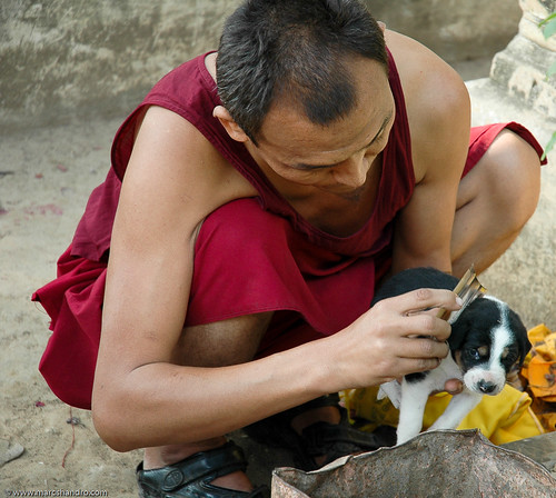 A Monk's Compassion | by Marc Shandro