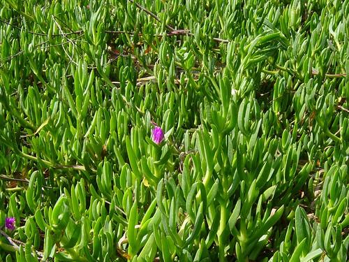 Southern Plants For Landscape Design Odenwald