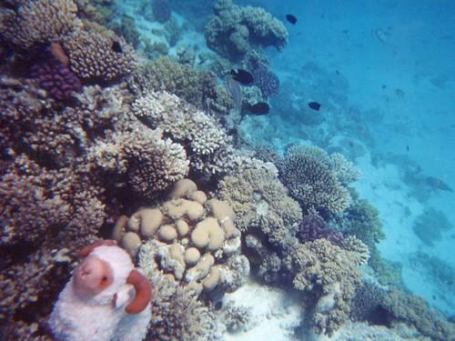 The Reef At Seahaven Beach Resorts Panama City Reviews