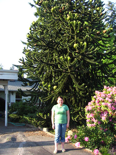 how to get rid of a monkey puzzle tree