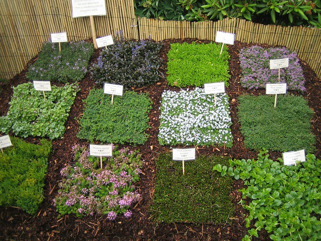 Ideas for crawling and carpeting rock garden plants flickr for Free rock garden designs