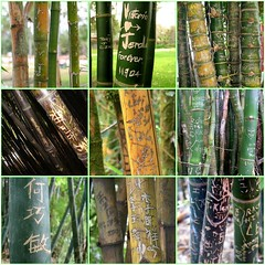 Bamboo graffiti | by bnz