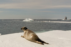 Ribbon Seal with Dyson I | by jomilo75