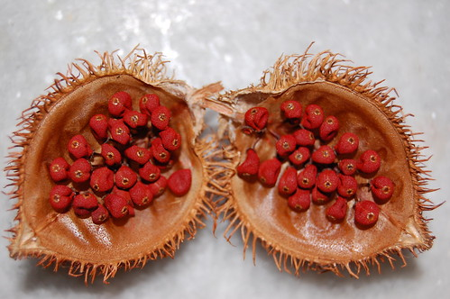 Urucum (bixa orellana) seeds | by árticotropical