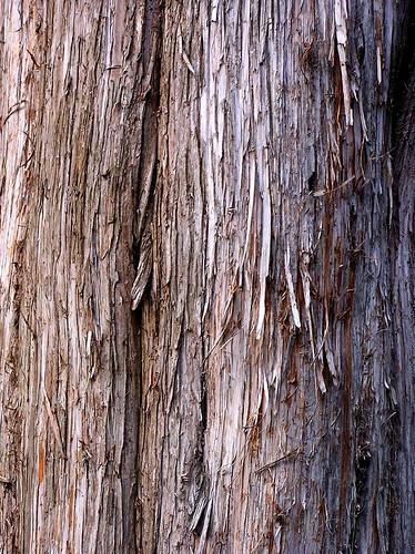 Is Cedar Bark Toxic To Dogs