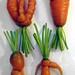 Funky Carrot 4